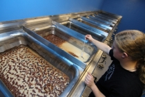 měření extraktu a teploty kvasícího piva v otevřených kádích